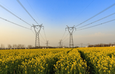 canola: canola flower field and transmission tower