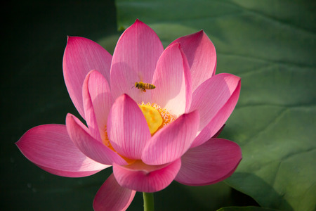 noises: Sunny days the lotus pond