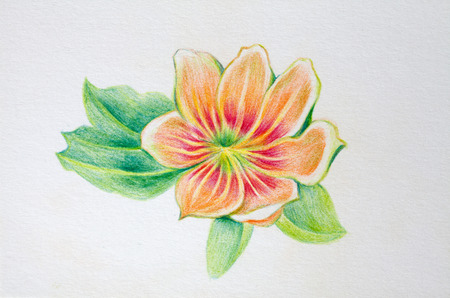 hand painting: Hand painting flower on wall