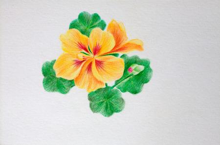 nasturtium: Use color lead creation of beautiful pictures