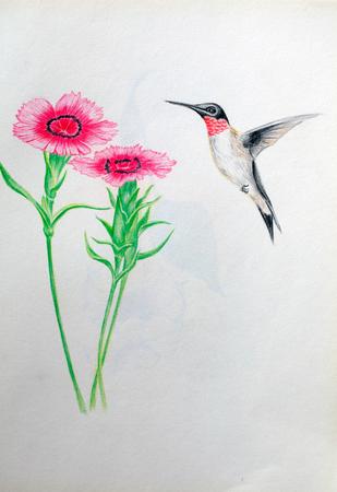 bid: hand drawn of bid fly to flower