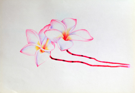 hand drawn flower Stock Photo
