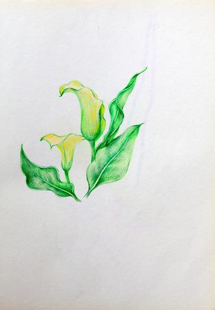 hand drawn yellow flower Stock Photo