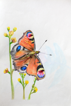 peacock butterfly: hand drawn butterfly
