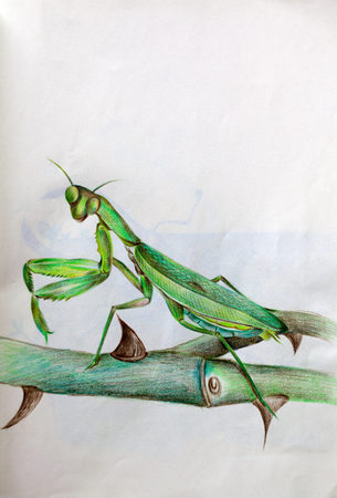 drawing paper: hand draw Mantis Sword Stock Photo