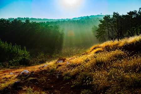 hillside: The morning sun shines on the hillside