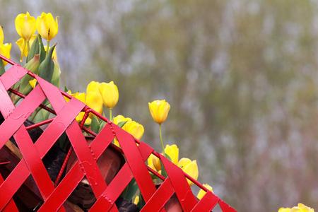 gules: Tulips flowers