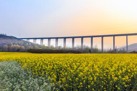 Sunset, rape, flowers, fields, beautiful scenery Imagens