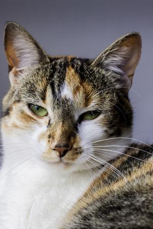 seem: A Dutch cat who did not seem to like portrait photographers  Stock Photo