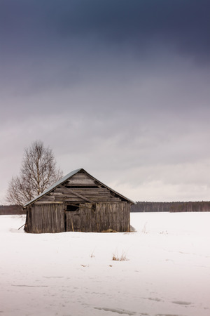 The birch tree is the only company for a lonely barn house. It was once part of a yard with a house and all. The house is now gone and all that is left is the birch tree.