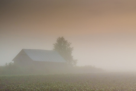 hardly: A very misty sunset in the rural Finland. You can hardly see the barn, the birch tree and the potato field.
