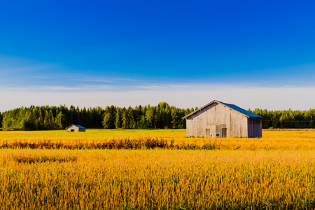 Beautiful sunny morning on the fields of the Northern Finland.
