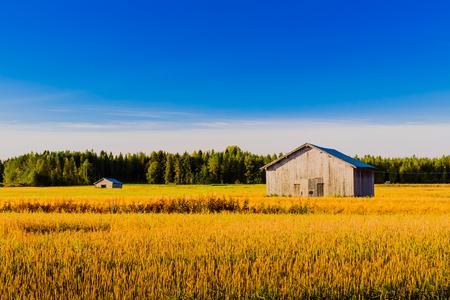 Hermosa mañana de sol en los campos del norte de Finlandia.