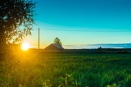 salix fragilis: The sun sets behind the willow branches and colors the hay on the field beautifully. Stock Photo