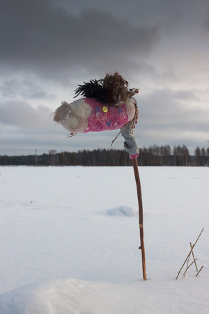 winter finland: A young stick horse running wild on a winter field in the Northern Finland.