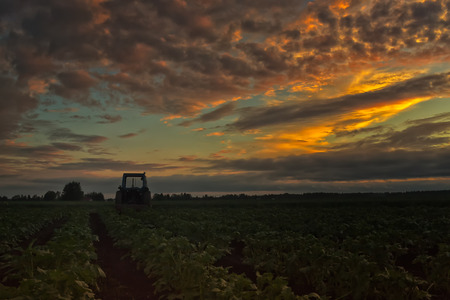 quite: The farmer has left his tractor on the potato fields to wait for the next busy day. The summer sunset in the Northern Finland is quite spectacular.