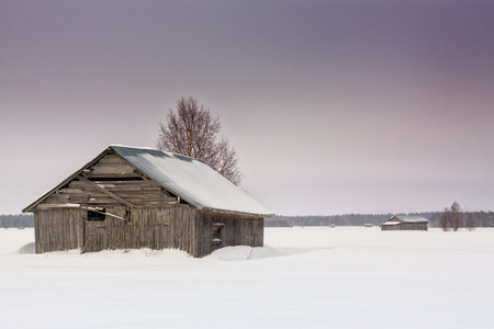 The storm covered everything on the fields with snow. The old barn houses are standing in the middle of the snow at the Northern Finland.