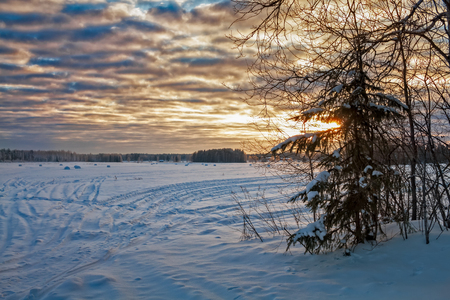 A tiny pine tree stands by the snowy fields on a very cold day in the Northern Finland. The sun is setting behind the dramatic clouds. Stock Photo