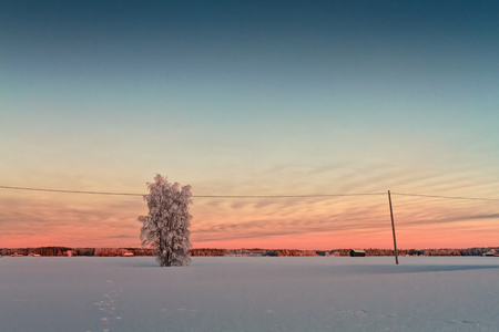 The winter sun sets behind a tree covered with frost in the rural Finland. Its only afternoon, but soon it will be very dark. Imagens