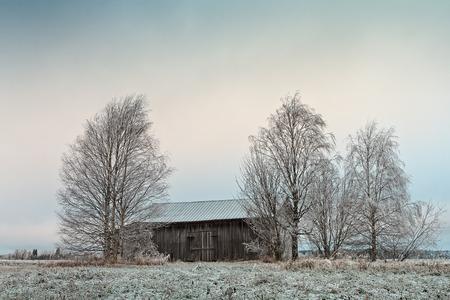 Una vieja casa de granero abandonada se encuentra entre los abedules en un campo helado en la Finlandia rural. Foto de archivo