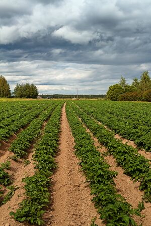 The rain clouds are gathering over the potato fields at the rural Finland. The summer weather is very unpredictable.