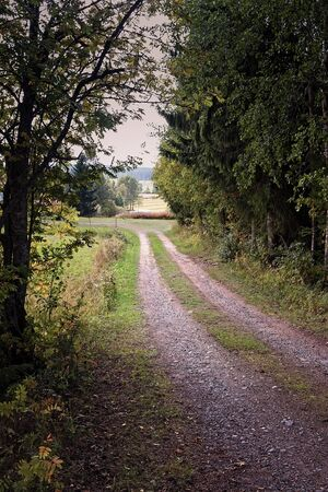 A gravel road leads to the fields by the trees at the rural Finland. This kind of roads are very typical at this part of the country.