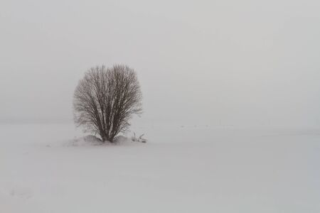 A willow is standing on the snowy fields of the rural Finland. The blizzard is raging around the bush.