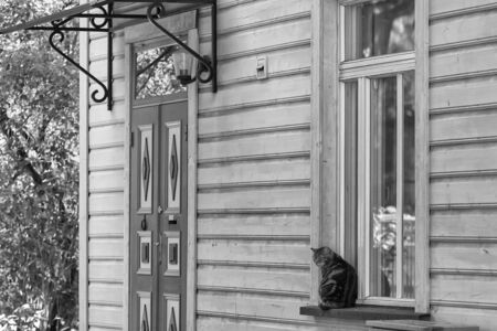 A cat enjoys a summer day by a window at Tallinn, the capital of Estonia. The scene is very tranquil althoug the house is right in the middle of the city.