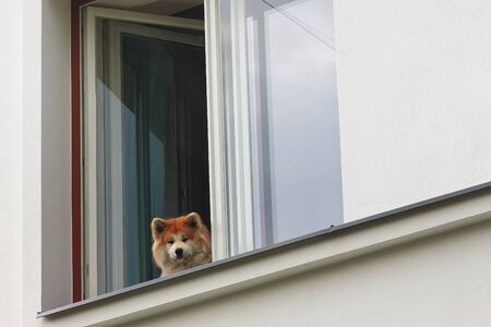 A dog watches the people passing by from a window in Tallinn, Estonia. The dog seems to be smiling at the people rushing by. Stock fotó