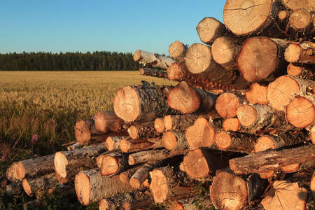The farmer has cut down some wood and piled it by the fields. The early autumn sunset colors the scene beautifully. Stock Photo