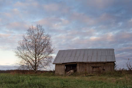 The autumn sunset colors the old barn house beautifully. The birch tree has already lost all it's leaves.