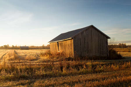 The old barn houses stand on the fields in the autumn sunrise. The sunlight emphasizes the autumn colors beautifully.