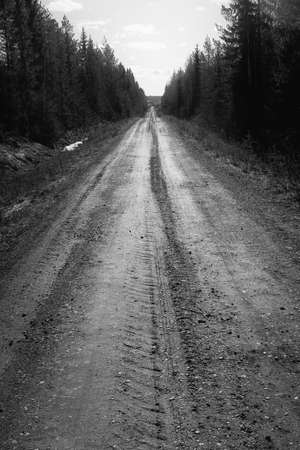 A gravel road leads through the Nordic forest. The dark pine trees form a dark alley. Stock Photo