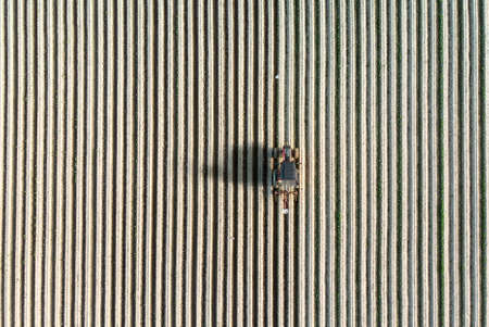 A tractor is driving precisely by the straight plows of the field. A couple of seagulls are waiting for the opportunity to catch a couple worms. Archivio Fotografico