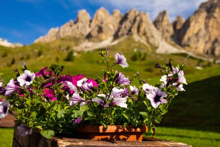 Petunia in a pot against the beautiful view Alpine mountains on a Sunny summer day. Passo Giau with Mount Gusela on the background, Dolomites, or Dolomiti Selva di Val Gardena, South Tirol, Italy Stock Photo