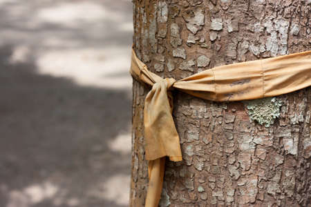 scrap: Scrap old Robe tied on a tree Stock Photo