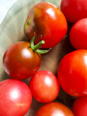 Harvest of ripe, red tomatoes in summer