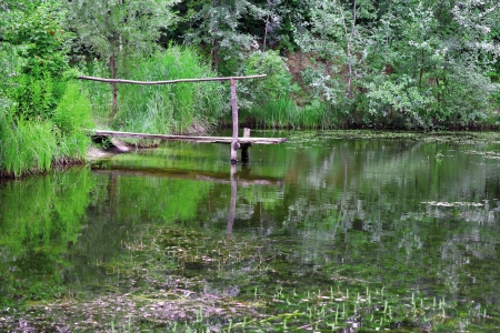 Wooden pier on a lake in a forest landscape photo