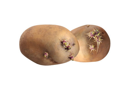 two pieces: closeup of sprouted potatoes two pieces on white background Stock Photo