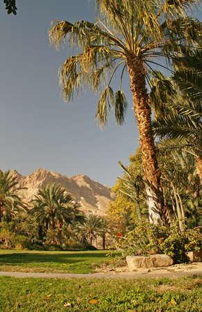 Botanic Garden in KIbutz Ein Gedi - Oasis in Negev desert Israel photo
