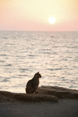 Cat siluette on sunrise Sea beach photo
