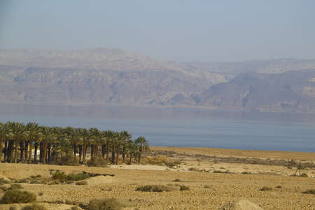 Plantation of the date palms in the oasis in the middle of Yehuda desert near the Dead sea , Israel The other visible bank is in Jordan photo
