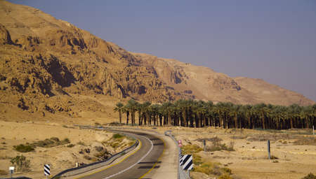 Plantation of the date palms and road  in the Yehuda desert near the Dead sea , Israel photo