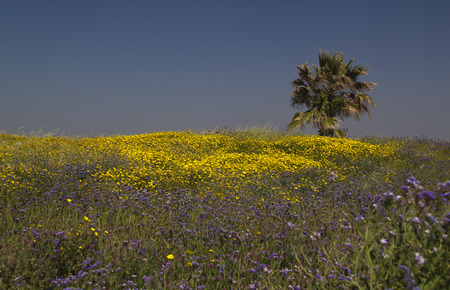 uncultivated: Uncultivated flowers in the spring field.Spring in Israel.
