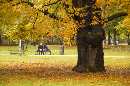Mature Couple sitting in a park under the ACutumn Chestnut Tree. photo