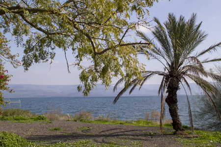 kefar: The seashore on the Sea of Galilee,Israel .Capernaum was a village in the time of the Hasmoneans, located on the northern shore of the Sea of Galilee,home of Saint Peter.