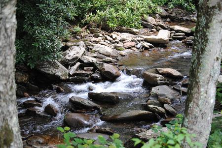 水のグレートスモーキー山脈の森の奥で下流に移動