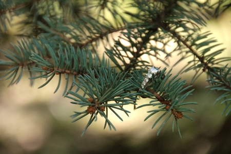 Engagement ring on pine tree