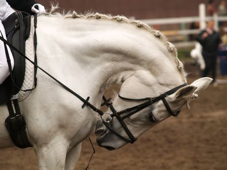 appealing: Head of a horse on in dressage. Braid mane for dressage. Braiding provides an aesthetically appealing look for a show horse.
