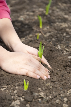 A child sits down sprouts in the garden photo